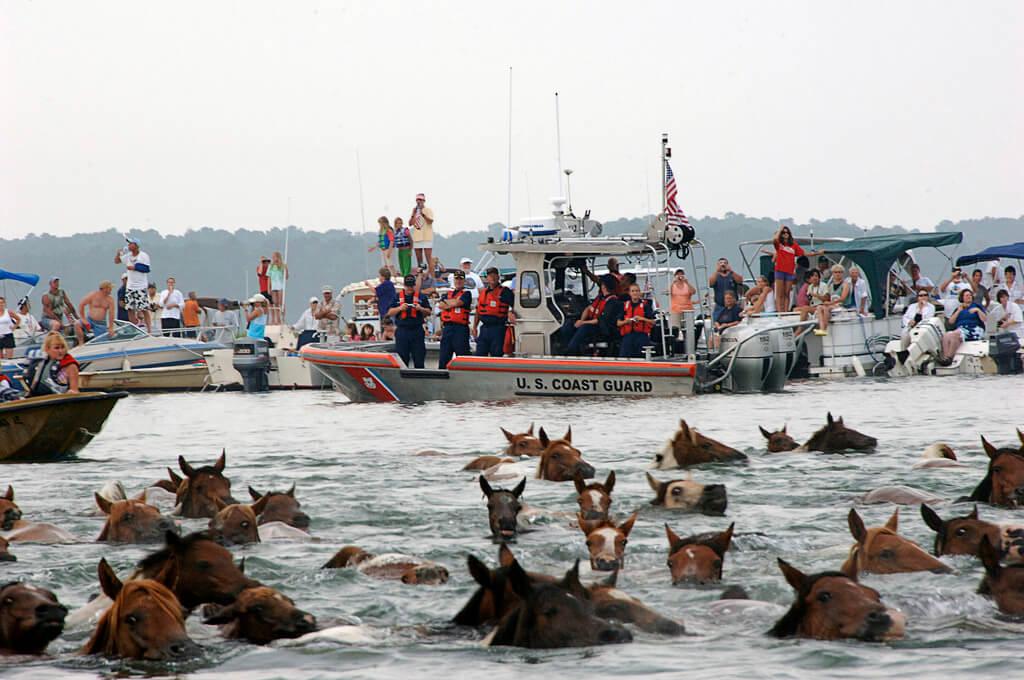 2018 Chincoteague Island Pony Swim